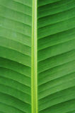 Banana leaf Royalty Free Stock Photography