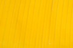 Banana leaf. Yellow banana leaf texture background Royalty Free Stock Photography