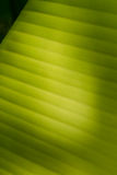 Banana Leaf-19 Fotografia Stock
