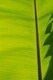 Banana Leaf-22 Fotografie Stock