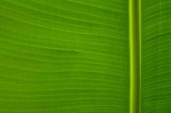 Free Banana Leaf Stock Photo - 71758130
