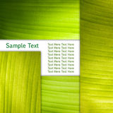 Banana Leaf Background Stock Images