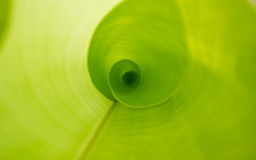 Banana leaf background Stock Photography
