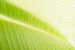 Banana leaf background Royalty Free Stock Photography