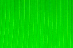Banana Leaf Background Stock Photos