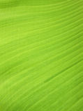 Banana leaf background. With lines Stock Photos