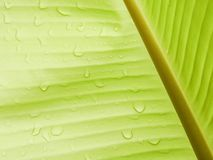Banana leaf background with raindrop Royalty Free Stock Photos