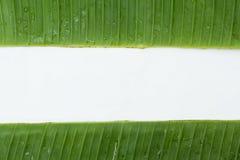 Banana leaf backgrounds Stock Photography