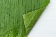 Banana leaf backgrounds Stock Images
