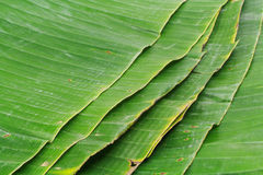 Banana leaf on blank plate for edit food. Or subject on Stock Images