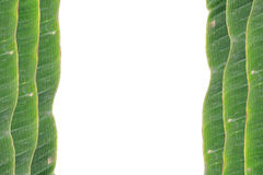 Banana leaf on blank plate for edit food. Or subject on Stock Photos