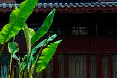 Banana Leaf-Classical Gardens of Suzhou. Suzhou classical gardens, known as Suzhou gardens, are world cultural heritage, national AAAAA level tourist attractions royalty free stock photo