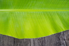 Banana leaf { close up } Royalty Free Stock Photos