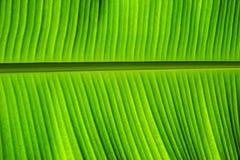 Banana leaf Royalty Free Stock Photos