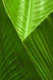 Banana Leaf Cup. A crossed banana leaf closeup Royalty Free Stock Photo