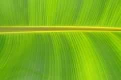 Banana Leaf Design Royalty Free Stock Photography