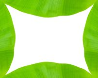 Banana leaf frame Stock Image