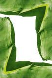 Banana leaf frame Royalty Free Stock Image