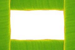 Banana leaf frame Stock Photo