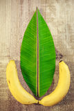 Banana leaf and fruit. Banana leaf cut in the shape of a normal leaf with two bananas in the bottom Stock Photo