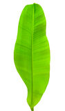 Banana leaf. Green banana leaf isolated on white background Royalty Free Stock Photos