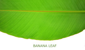 Banana leaf isolated for background Royalty Free Stock Images