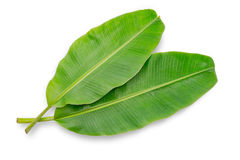 Banana leaf isolated on white background. File contains a clipping path Royalty Free Stock Image