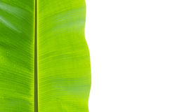 Banana leaf isolated on white Stock Images