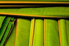 Banana leaf patterm Stock Photos