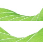 Banana leaf pattern Royalty Free Stock Photo