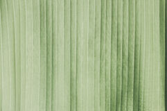Banana leaf of pattern background Royalty Free Stock Photos
