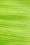 Banana leaf of pattern background Stock Photography