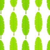 Banana leaf pattern Stock Photos