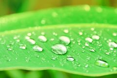 Banana leaf pattern with texture water drop in the morning beautiful for background with copy space add text. select focus shallo. W depth of field stock photo