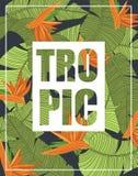 Banana leaf template vector illustration Stock Photos