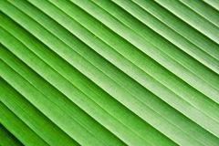The banana leaf texture Stock Photography