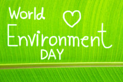 Banana leaf textured, write World Environment Day Royalty Free Stock Photos
