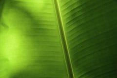 Banana Leaf in Thailand Stock Photos