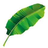 Banana leaf 2 Royalty Free Stock Photo
