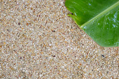 Banana leaf  and washed gravel floor use for texture Stock Image