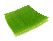 Banana leaf on white Stock Photography
