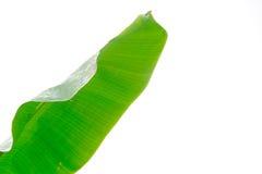 Banana leaf on white isolated background Stock Images