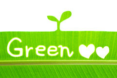 Banana leaf write Green and draw sprout Stock Image