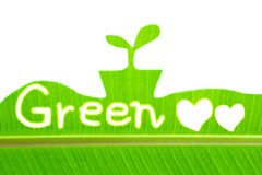 Banana leaf write Green and draw sprout Stock Photography