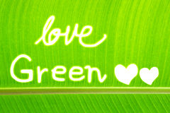 Banana leaf write Love Green Royalty Free Stock Photos