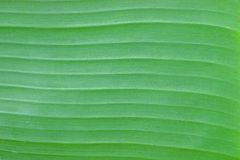 Banana Leave Pattern Royalty Free Stock Photos