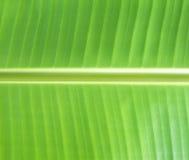 Banana leaves Royalty Free Stock Photos