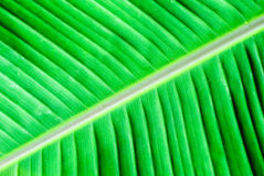 Banana Leaves Background Stock Images