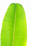 Banana leaves. Bright colors can be used to advantage Royalty Free Stock Images