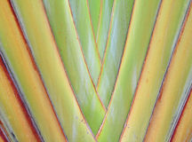Banana leaves cascaded like a blow background Stock Images